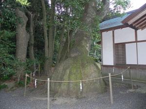 境内の異様な樹木