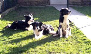 Yola, Orphée und Farah