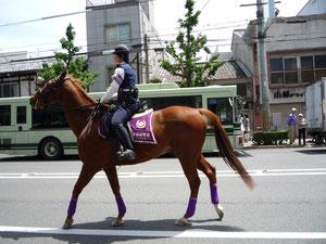 京都の葵祭で見た思い出のお馬さんです。はいているのは、高貴な紫色のレギンスではなくてレッグウォーマー・・・❤