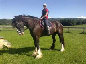 Shire Horse Prinz Hary :-)