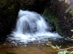 Sources aurifères de la forêt d'huelgoat. la mare aux sangliers. (29). RLM 2012