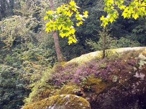 Forêt d'Huelgoat (29) RLM 2011