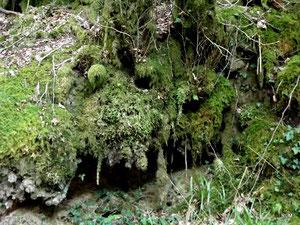 Masque...Forêt d'Huelgoat (29). RLM 2012