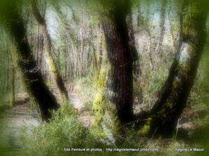 Bois de Térénez (29) RLM 2013