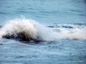 Un animal sort de l'eau...Guisseny (29) RLM 2012