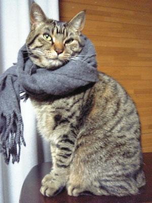 寒さ対策はしっかりと!