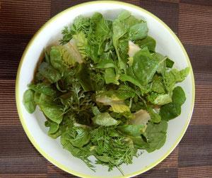 Salade verte en provenance du Potager Educatif de La Navata (Madrid-Espagne)