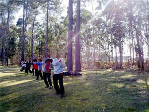 Travail d'ensemble par un beau lundi matin sous les eucalyptus.