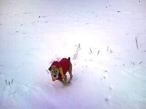 Schnee liebe ich