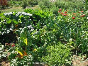 Associations bénéfiques et biodiversité au potager