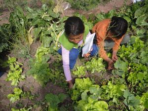 Niñas aprendiendo de la dinámica de vida en un Biohuerto Educativo (Cusco – Perú)