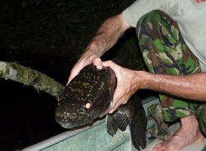 Pêche en Guyane aïmara