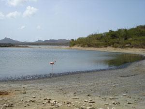 Flamingo in het Goto meer