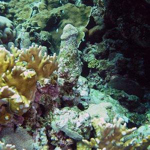 Neue Korallenart !!