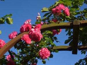Gehen Sie durch unseren Rosenbogen, genießen und staunen Sie , liebe Gäste!
