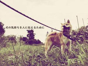 犬の気持ちを人に伝えるために