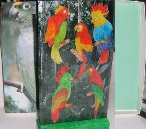 Pour oizy qui aime les oiseaux tropicaux