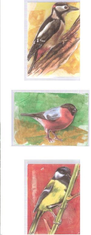 Les Oiseaux d' Odile...