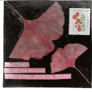 feuilles de ginko découpée sur cellophane de fleuriste sur acrylique noir