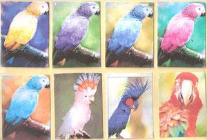 Oiseaux exotiques ... 8pièces...