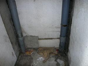 つららの排水管
