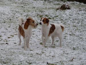 Dipsy und Chiva im Schnee