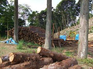 伐採した木材は一か所に集めます。