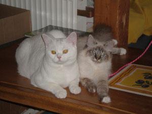 Unsere zwei Samtpfötchen: Vanillo & Samira