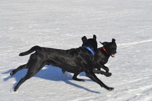 Duke gibt seinem Freund Nero schon das Tempo vor ;))