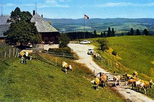 Ahorn, Bergrestaurant und Alpbetrieb  (AH 6)