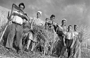 Luthern Bad, Bodenenzi, Getreideernte Familie Roos,von rechts Josy, Josef, Emma Roos, um 1949  (LW 3)