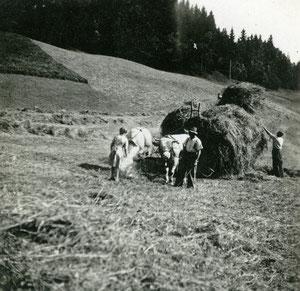 Luthern Bad, Heuen mit Kuhfuhrwerk Hinter Enzi, Anna Peter mit rauchendem Bremsenkessel zur Insektenabwehr  (LW 4)