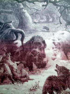 Wölfe greifen im Wald von Requesens einen Eber an - Stich 1884