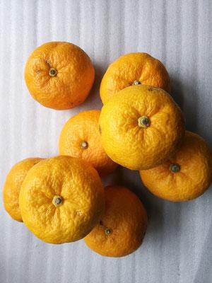愛媛、高知県産を中心に四国原産の柚子を使用