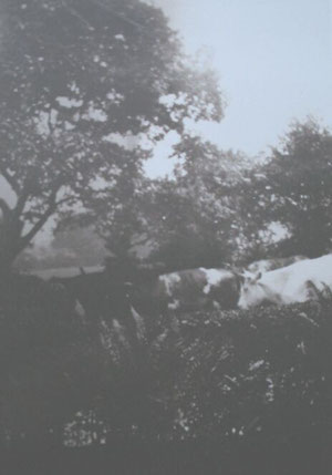 Cows being led along Greenwood Road, later Olton Boulevard East (thanks to Dorothy Jones)