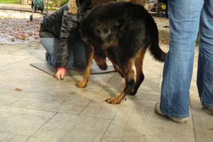 bei dem Training mußten dann auch die HF mal vor ihren Hunden auf die Kniee fallen:-)