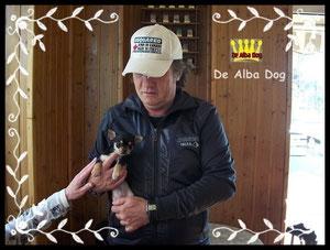 Foto cachorro chihuahua macho de color negro-fuego y pelo corto de los criadores de perros de raza chihuahua De Alba Dog, venta de cachorros chihuahua de pelo corto y largo con pedigree y afijo en Valencia, Comunidad Valenciana, España