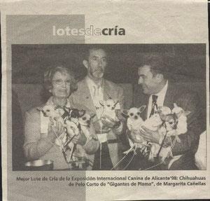 Lote de cria chihuahua de exposicion 1998