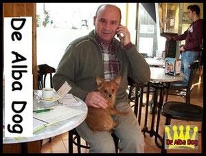 Foto cachorro chihuahua macho de color rojo y pelo largo de los criadores de perros de raza chihuahua De Alba Dog, venta de cachorros chihuahua de pelo corto y largo con pedigree y afijo en Valencia, Comunidad Valenciana, España