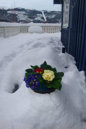 Frühling - wo bist Du????