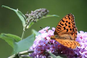 Libellules & papillons