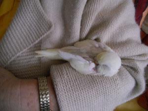 diese Albinobabys sind sooo unglaublich süß