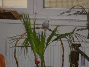 Pucki, ganz neu als Abgabetier eingeflogen