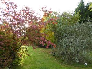 Acer aconitifolium, Pyrus pendula salicifolia and acer pensylvanicum