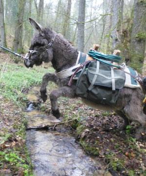 Aaaan HOPPPPP ! Léini will keine nassen Hufe...
