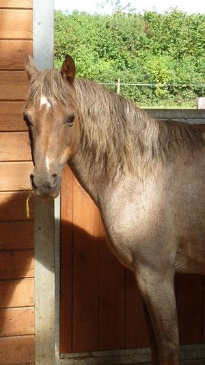 Jamboree: Gamine's jüngere Schwester - unser freundliches Bodenarbeits-Pony