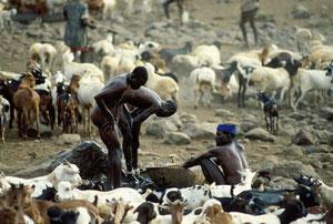 Pastori Turkana si lavano ad un pozzo