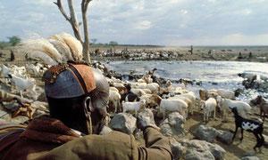 Capo Turkana controlla il bestiame al pozzo