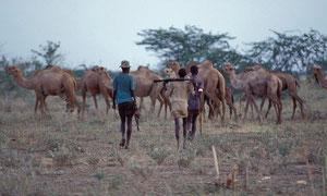 Turkana e Dromedari