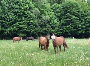 Unsere Pferde sind die Seele des Gut Charlottenthals – jeder mit eigenem Charakter.